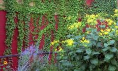 Garden-Epson